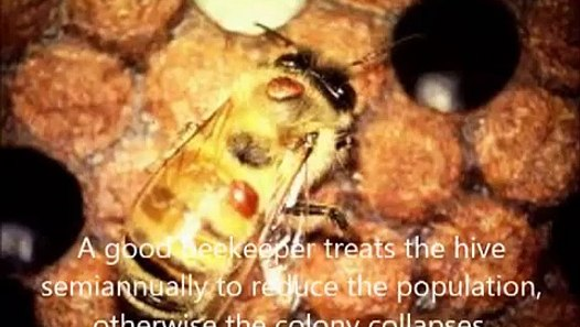 2012 09 19 Varroa mite control in a honey bee hive using for