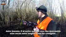 Chasse aux sangliers : Les Meilleures Battues 2015 - Chasse HD