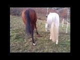 sauvés de l'abattoir, sauvé de la mort, chevaux maltraités