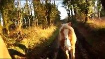 Dans le pas des chevaux..... dans l'eau !
