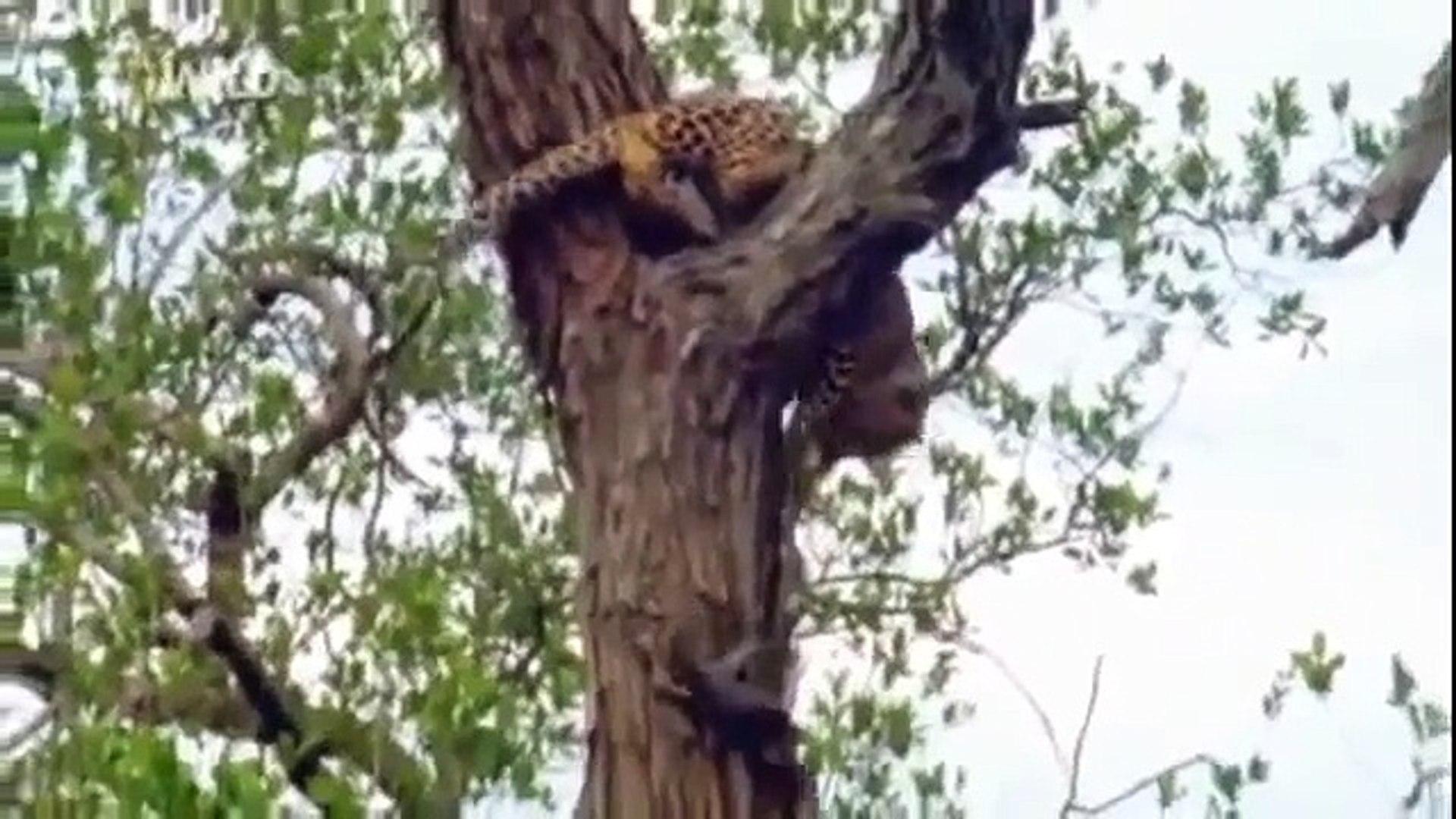 wild life Documentary   Animal Planet   Wildlife Animals