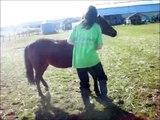 Complicité entre cheval et cavalier