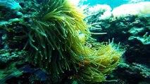 SCUBA Diving in Palawan/Coron (Dimakya Island Club Paradise and Apo Reef) GO PRO HERO4