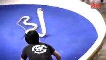Kobrayla Öpüşen Adam