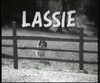 Lassie & Timmy in the Matrix