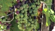 Les vins du château Montrose - Bordeaux - Millésima