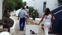 9 Lives Lanzarote: 2 New Cat Cafés at a Lanzarote tourist complex