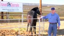 Travel N Corrals ::  Portable Pipe Panel Horse Corrals