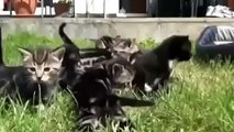 Best funny animal videos compilation 2014 Funny Cats and Kittens Meowing Compilation 2014 LZ 7qvoiJ5