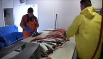 Salmon Country:: Alaska:: Protecting Fisheries