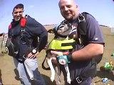Benny's Skydive! (rat terrier dog goes skydiving!) skydiving dog