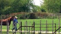 Quarter Horse for sale / Ft. Worth Texas / Rosenauer Quarter Horses 76028