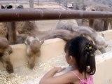 Zoo Oasis Park - Fuerteventura - Islas Canarias