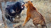 Biggest Mother's fights against lions,wolves,cats,dogs. the ultimate protection stories