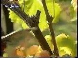 Op bezoek bij Zonin in Gambellara; hoe wordt Recioto wijn gemaakt?