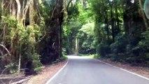 Driving In Rain Forest- Lamington National Park in Queensland استراليا الغابات المطريه في كوينزلاند