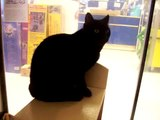 Laura -shy black cat see her here! ***ADOPTED*** Noah's Kingdom Humane Society