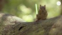 Jedi Chipmunks : Bataille au sabre laser