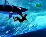 Tubaroes branco atacam surfista!!!