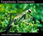 Fangschrecke Gottesanbeterin Tiere Animals Natur SelMcKenzie Selzer-McKenzie