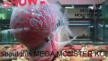 "10"" Red Kamfa masterpeice MEGA MONSTER KOK (Fengshui)"