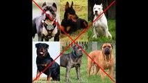 No al maltrato animal, tomemos conciencia.