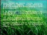 CRAM: zones verdes submergides (Vilanova i la Geltrú)
