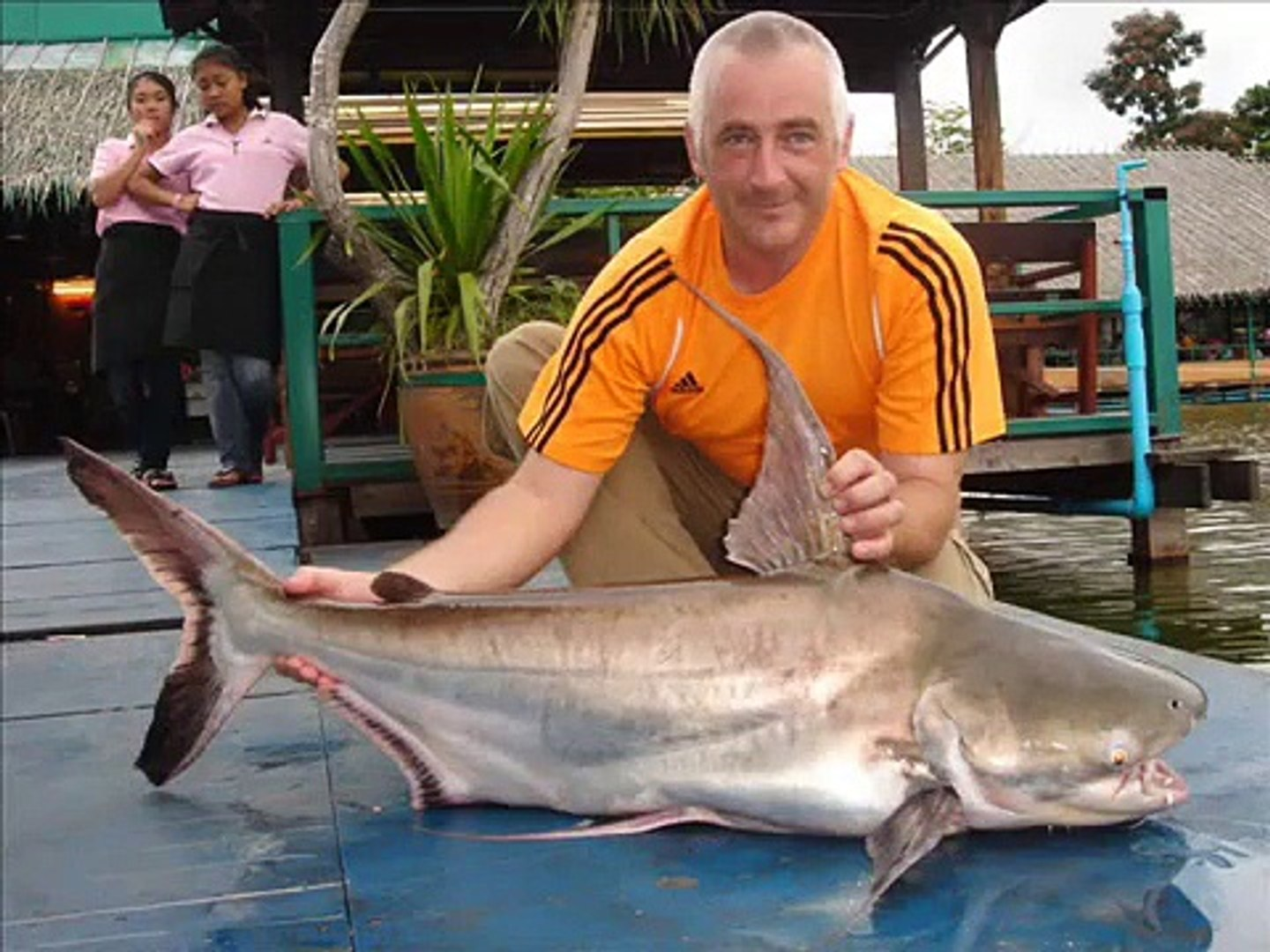 Fishing Thailand Bangkok Giant Mekong Catfish and Siamese Carp ...