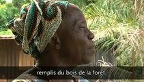 Le mensonge d'Ali Bongo sur le bois gabonais.