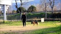 Profesyonel Köpek Eğitimi  7 -- Bursa K9 --