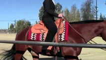 Zips Country Chip AQHA All Around Gelding(1/2)