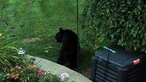 black bear raiding the bird feeder
