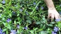 Le jardin écologique (Les propos de jardiniers 10/12)