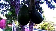 Faunes et Fores de la Réunion