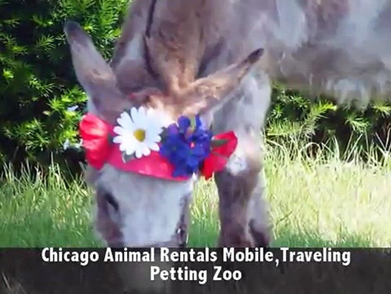 Call 815-600-6464-Animal Rental,Animal Rentals,Animal Rental Chicago,Animal Rentals Chicago Area