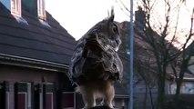Un hibou grand-duc se pose sur une tête