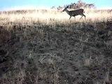 Deers doing....deer stuff