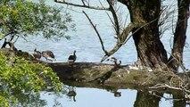 Natuurgebied de Blauwe Kamer Rhenen: video compilatie HD
