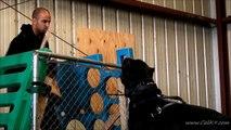 Cane Corso Bite Work - Cali K9® Bay Area Dog Training - San Jose