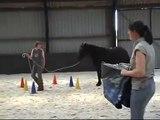 Quinoa - Meréns - Jonge paarden training in Ansen