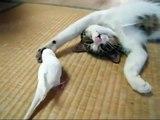 Réveillé par un oiseau, ce chat est pourtant bien décidé à dormir.