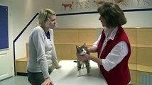 Whiskas® Erste Hilfe für die Katze Verhalten im Notfall