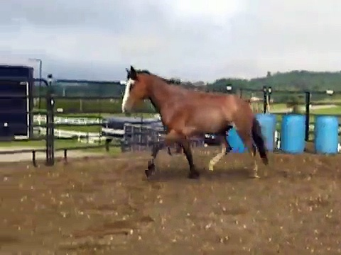 "Spanish Mustang mare for sale ""Mitexi"""