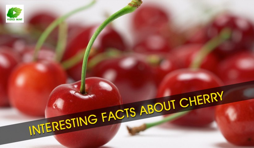 Interesting Facts About Cherry | Best Food Tips | Educational Videos