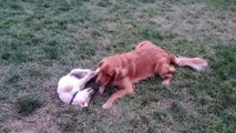 Un chien rencontre un bébé chien pour la première fois - Adorable