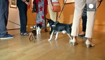 Berlin : une exposition de peinture canine ouverte aux chiens