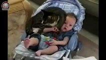 Lustige Katzen Videos #48 (Zusammenstellung, 2015) - Lustige Tiere, Süße Katzen