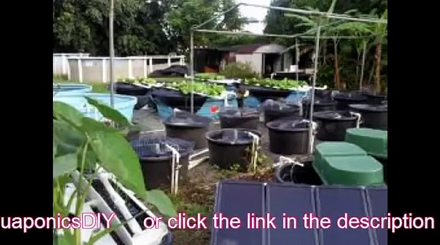 Aquaponics – The New Way of Growing Plants – Fast