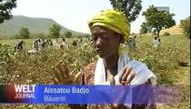 Film sur le commerce équitable au Sénégal