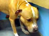 Saved from Death Row - Happy Tails of NY ACC Dogs